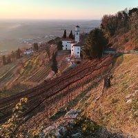 Da Cormons al Monte Quarin a piedi, tra boschi e vigneti
