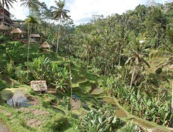 Cosa vedere a Bali in 3 giorni