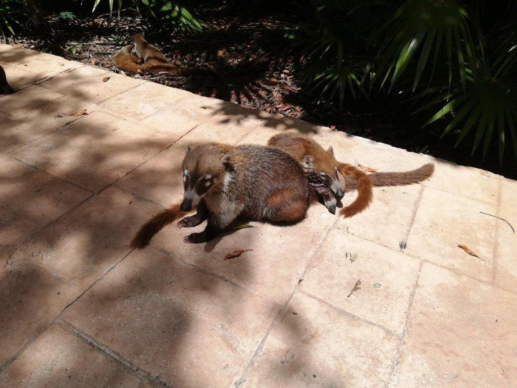 Animali Messico Yucatan