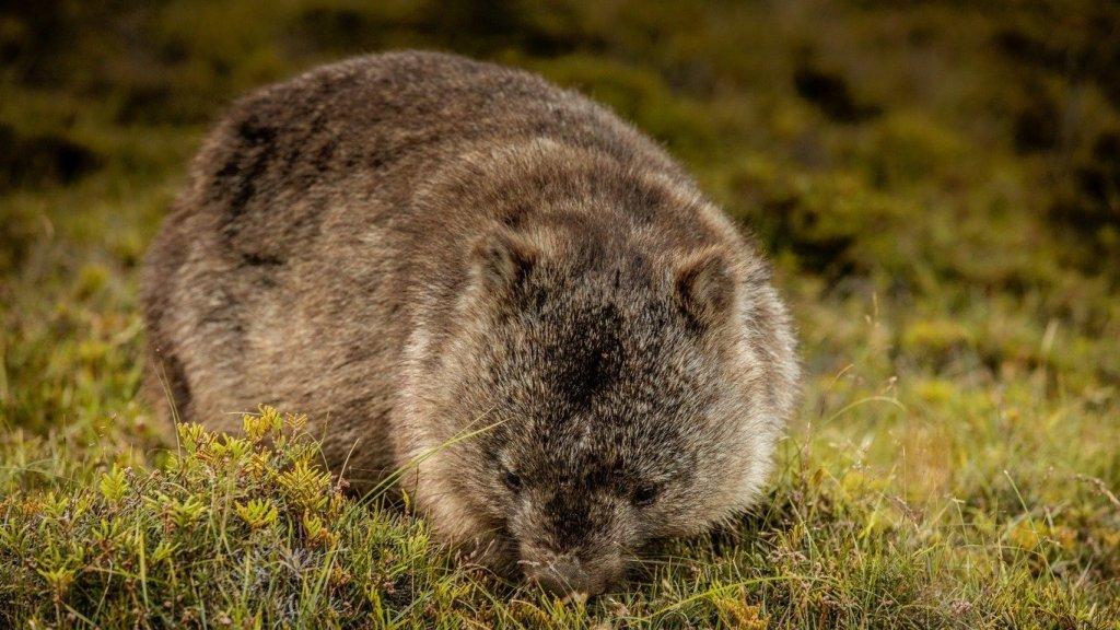 Cose da vedere in Tasmania