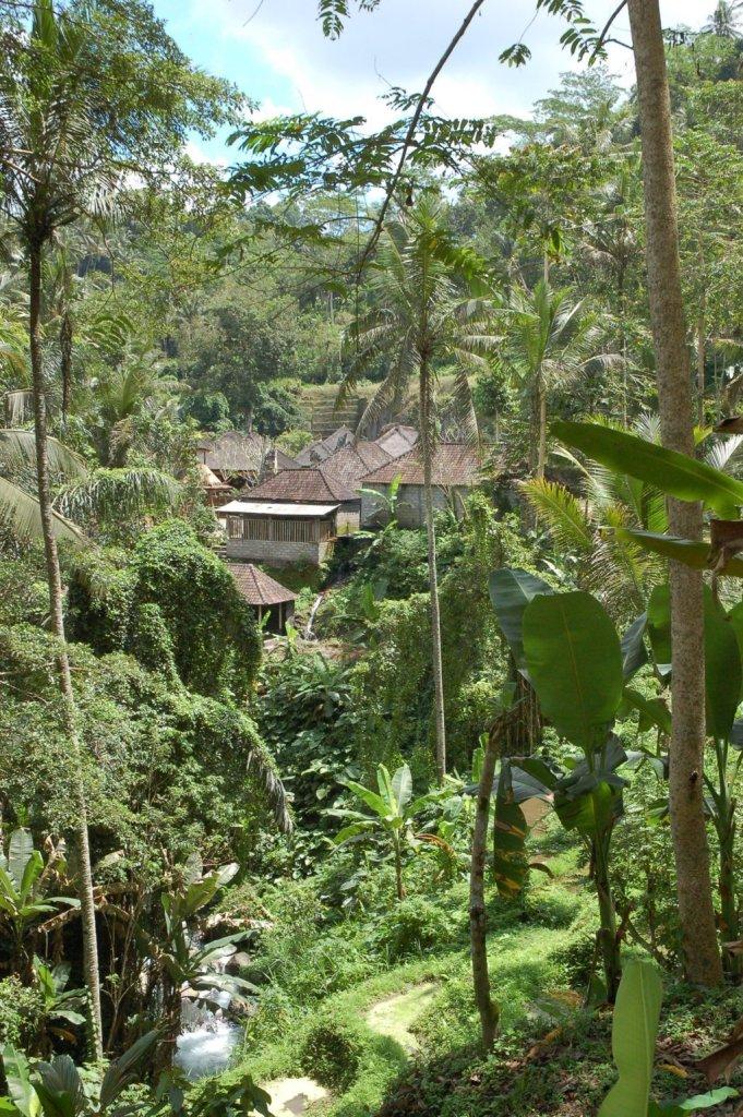 Bali terrazze di riso