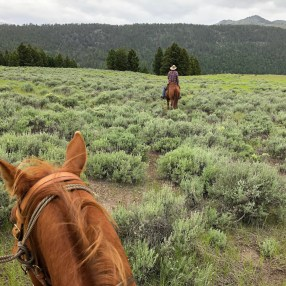 Review: Ranch At Rock Creek, Montana