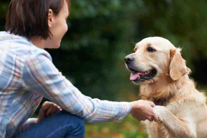 Loving dogs is the #1 skill for the dog care business!