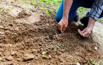 SEFAZ AM : Obrigatoriedade da NF-e para Produtor Agropecuário e Produtor Primário