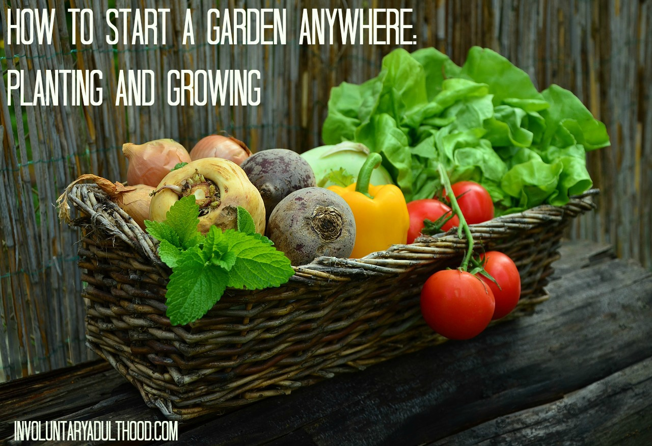 How to Start a Garden Anywhere – Planting and Growing