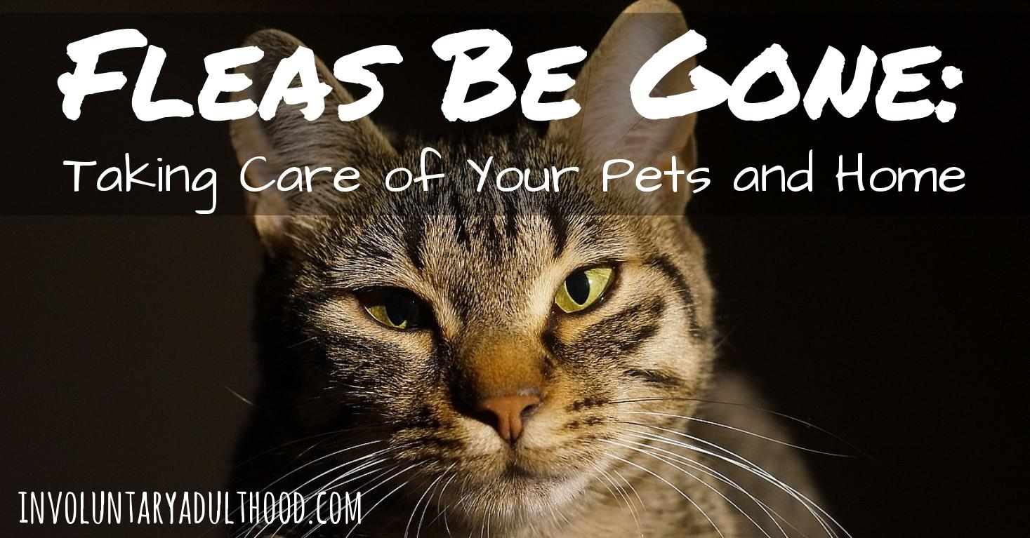 Fleas Be Gone: Taking Care of Your Pets and Home