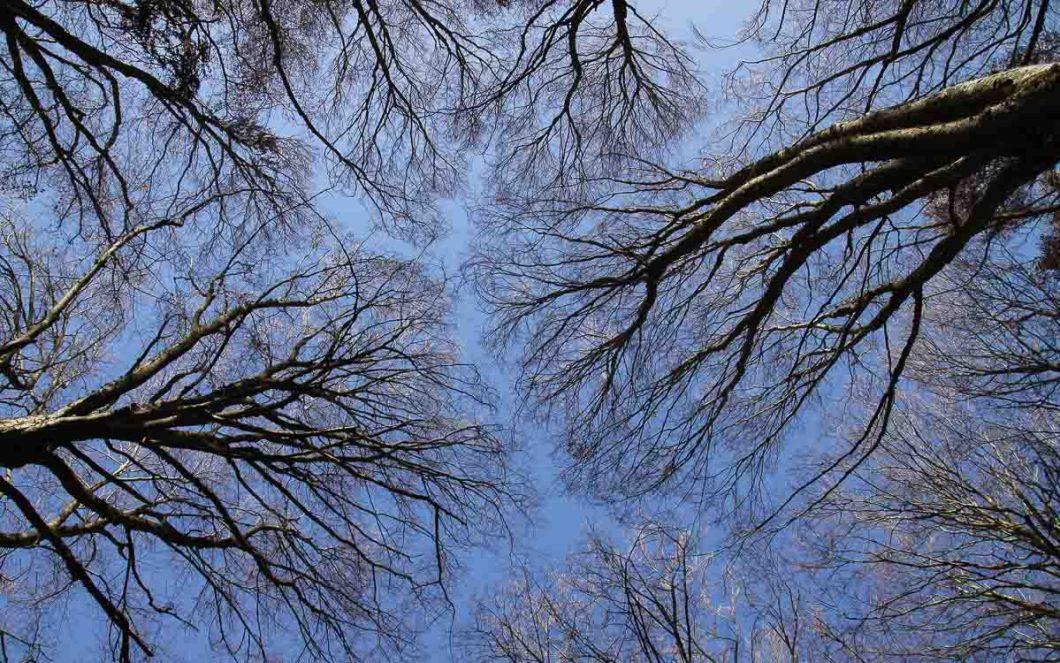 Il bosco di Sant'Antonio in Abruzzo | Foliage autunno
