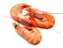 Image Result For Shellfish Allergy And Contrast Dye