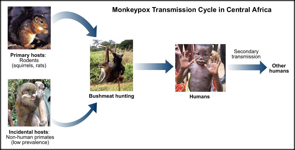 Image result for monkeypox in animals