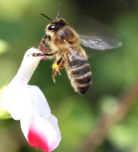 bee landing P -