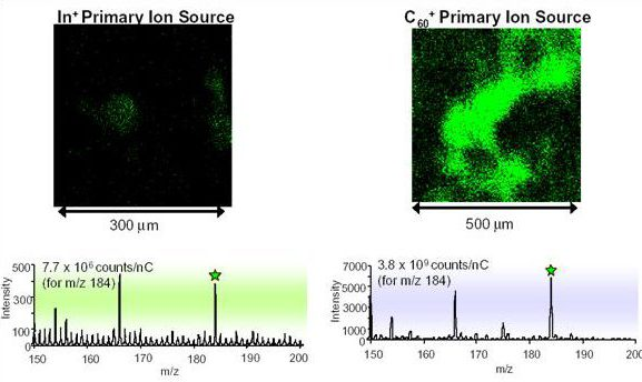 Mapping the phosphocholine headgroup in tetrahymena cells.