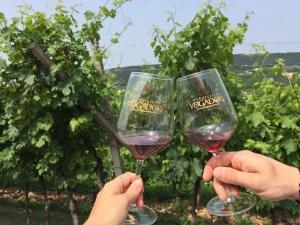 wine tasting fratelli vogadori