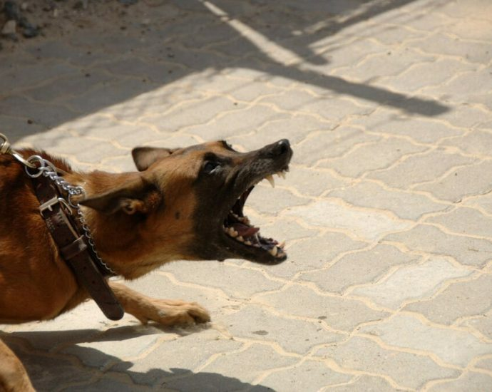 Senator barked up the wrong tree in defending kennel owner 5