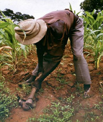 small-farmers