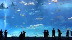 I 10 acquari più grandi del mondo