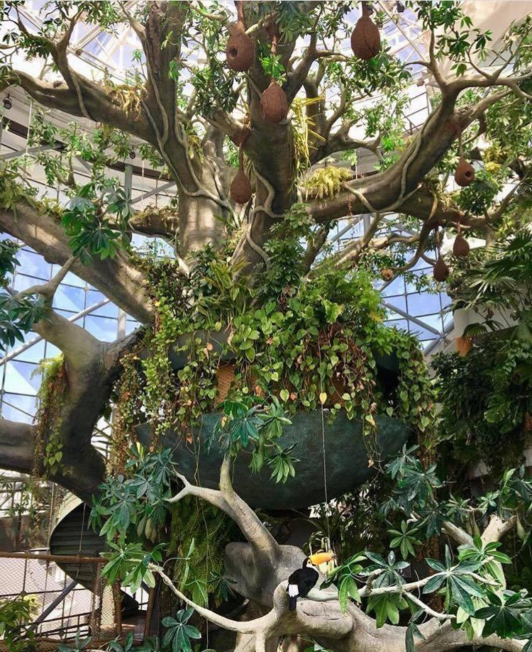 La foresta tropicale dentro The Green Planet di Dubai