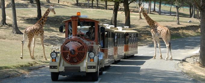 Il trenino nel parco Safari Park di Pombia in Piemonte