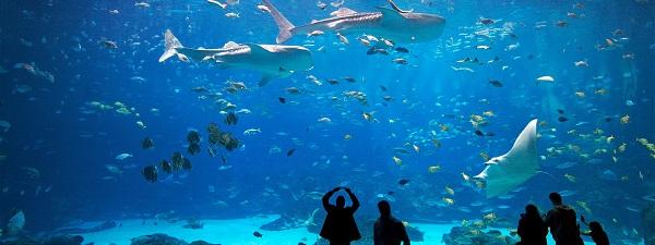 Il Georgia Aquarium di Atlanta, uno degli acquari piu grandi del mondo