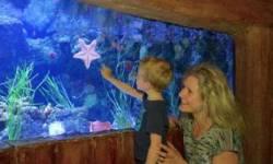Domenica 13 maggio al Jesolo SEA LIFE Aquarium ingresso gratuito per le mamme