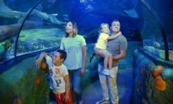 Gardaland SEA LIFE Aquarium festeggia i suoi primi 10 anni con una caccia al tesoro e la partecipazione di Massimiliano Rosolino