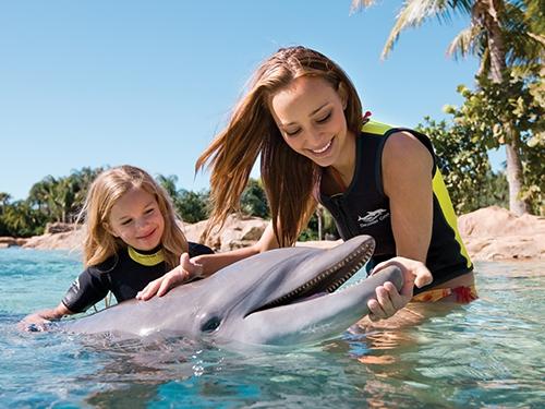 Incontro con i delfini, una delle esperienze di Discovery Cove Orlando