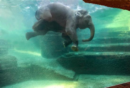 Il parco degli elefanti allo zoo di Zurigo