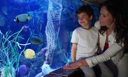 Per la festa della mamma ingresso gratuito al Lido di Jesolo SEA LIFE Aquarium