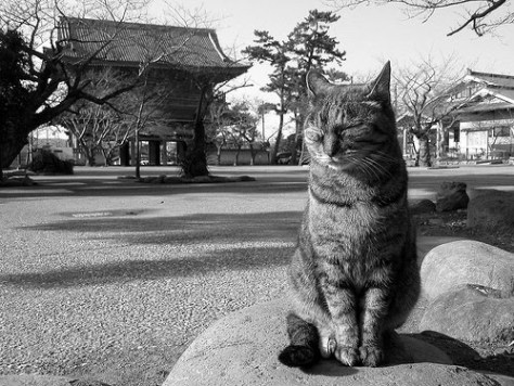 El maravilloso arte de una gata