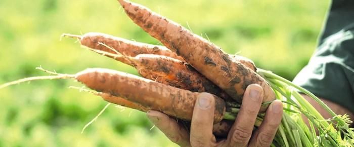 Attenti al benessere e alla natura con i prodotti HIPP - IperBimbo