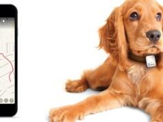 Hund App
