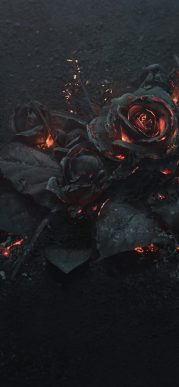 rose-ashes-fire