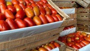 VIDEO Otro aumentazo más: Tomate subirá nuevamente y podría llegar a G. 20.000 por kilo