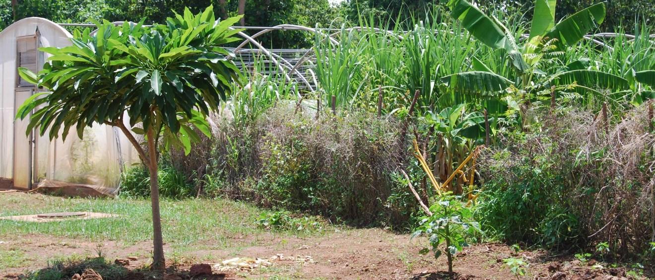 DER des Eaux et Forêts et du Génie Rural