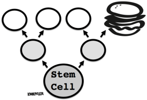 Paul Stem Cell Burger Pic