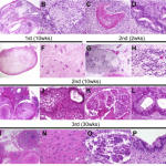 Cool, encouraging new preclinical study on monkey iPS cells