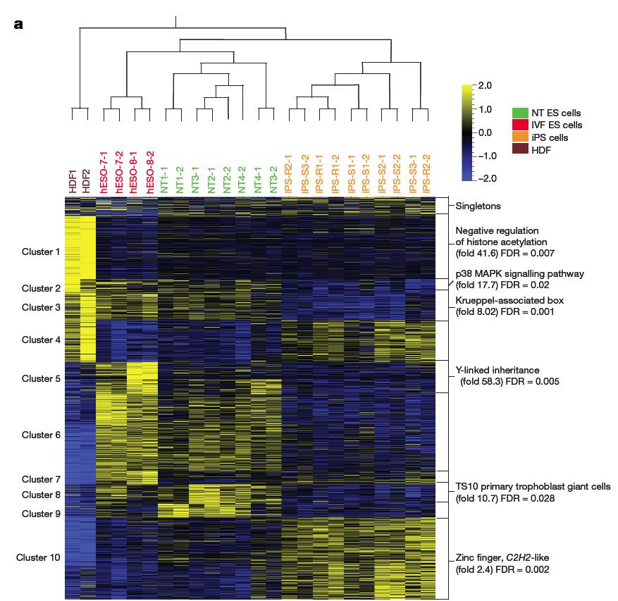 NT ESC gene expression