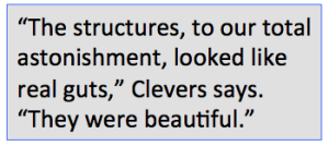 Hans Clevers