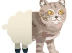 sheep cat
