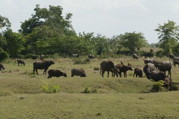 Quién es hipertensión pautas actualización safari
