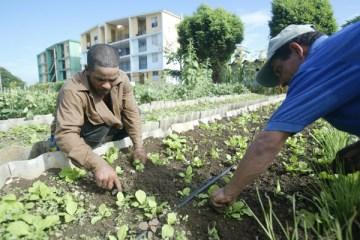 """El encuentro acogió una sesión titulada """"Sembrando innovaciones para el futuro de la agricultura urbana y suburbana en Cuba: una mirada desde la cooperación internacional""""."""