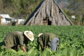 El gobierno cubano se ha propuesto un crecimiento del PIB de apenas un 2 por ciento este año.