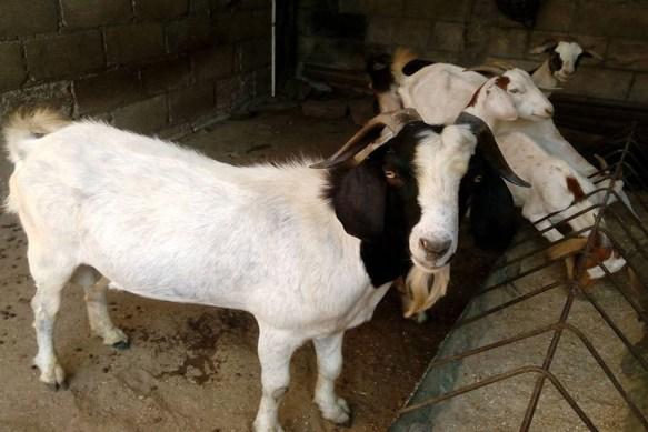 sacrificio de animales con fines religiosos cuba
