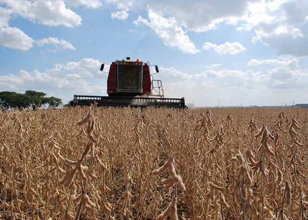 The soybean harvest this year in Brazil will hit record levels and reaffirm that the country is about to displace the United States as the world's top producer of soy. Credit: Embrapa