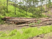 Illegal logging continues unchecked in Honduras. / Credit:Courtesy of Democracy without Borders Foundation