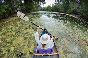 """Florida Algae Bloom"" by U.S. EPA/John Moran. Public domain."