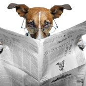 bites - https://depositphotos.com/8634620/stock-photo-dog-reading-newspaper.html
