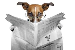 bites - https://depositphotos.com/8634620/stock-photo-dog-reading-newspaper.html