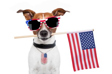 https://depositphotos.com/11078435/stock-photo-american-dog.html