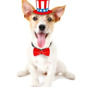 https://depositphotos.com/126326578/stock-photo-cute-dog-with-uncle-sam.html