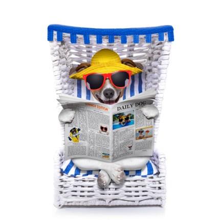 https://depositphotos.com/59960165/stock-photo-dog-beach-chair.html